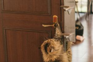 自宅ドアを長く使い続けるなら自動ドア化がおすすめ